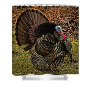 Spring Gobbler Shower Curtain