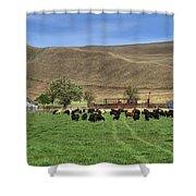 Spring Grazing Shower Curtain