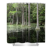 Spring Green In Cypress Swamp Shower Curtain