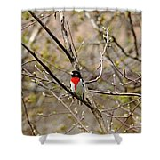 Spring Grosbeak Shower Curtain