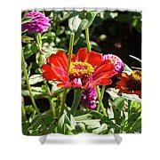 Spring Has Sprung Shower Curtain by Valeria Donaldson