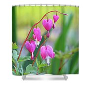 Spring Hearts - Flowers Shower Curtain