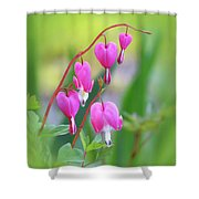Spring Hearts - Flowers With Vignette Shower Curtain