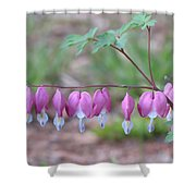 Spring Hearts Shower Curtain