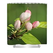 Spring Highlights Shower Curtain