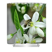 Spring Honey Bee Pollinates Orange Citrus Flower Shower Curtain