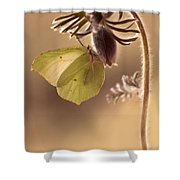 Spring Impression With Pasque Flower Shower Curtain