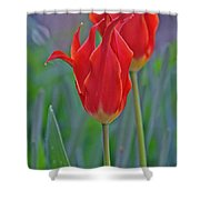 Spring Impression Shower Curtain