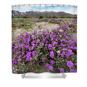 Spring In Anza  Shower Curtain