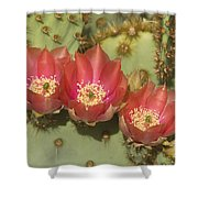 Spring In Arizona Shower Curtain