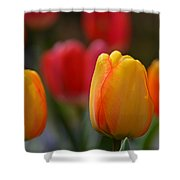 Spring In Colors Shower Curtain