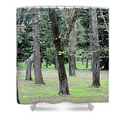 Spring In Rome Shower Curtain