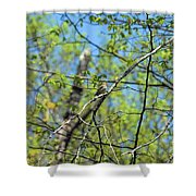 Spring In The Deep Woods Shower Curtain
