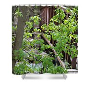 Spring In The Mountains At American Fork Canyon Utah Shower Curtain