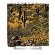 Spring In The Sonoran Desert  Shower Curtain