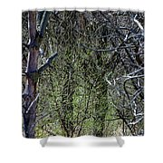Spring In The Timber Shower Curtain