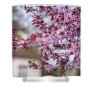 Spring In Town Shower Curtain