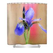 Spring Iris 2 Shower Curtain