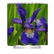 Spring Iris Shower Curtain