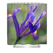 Spring Iris Three Shower Curtain