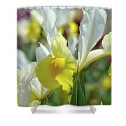 Spring Irises Flowers Art Prints Canvas Yellow White Iris Flowers Shower Curtain