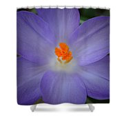 Spring Is All Around Shower Curtain