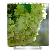 Spring Is In The Air -vines Botanical Garden Shower Curtain