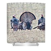 Spring Is Near Shower Curtain
