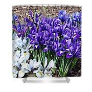 Spring Japanese Iris Shower Curtain