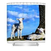 Spring Lambs Evening Light Shower Curtain