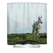 Spring Layers Shower Curtain