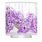 Spring Lilac Flowers Blooming Isolated On White Shower Curtain