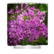 Spring Lilacs On Black Shower Curtain