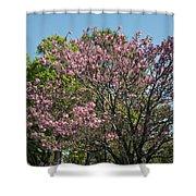 Spring Magnolia Shower Curtain