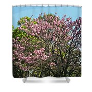 Spring Magnolia In Winter Park  Shower Curtain