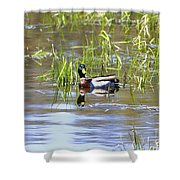 Spring Mallard 2010 Shower Curtain