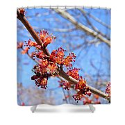Spring Maple Blossoms Shower Curtain