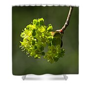 Spring Maple Shower Curtain