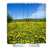 Spring Meadow Full Of Dandelions Flowers And Green Grass Shower Curtain