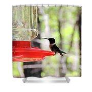 Spring Migration Hummingbird Shower Curtain
