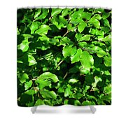 Spring New Beech Leaves Shower Curtain