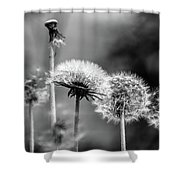 Spring Over... Shower Curtain