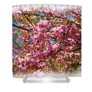 Spring Pink Blossoms Shower Curtain