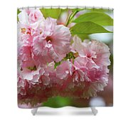Spring Pink, Green And White Shower Curtain