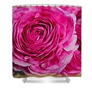 Spring Pink Roses Shower Curtain