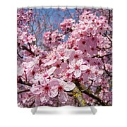Spring Pink Tree Blossoms Art Print Baslee Troutman Shower Curtain