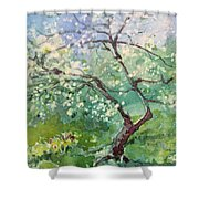 Spring Plum Shower Curtain