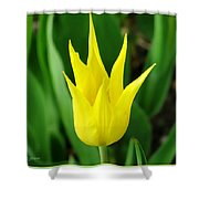 Spring Radiance Shower Curtain