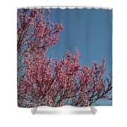 Spring Redbud Tree Shower Curtain
