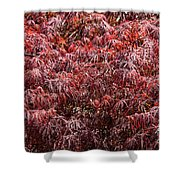 Spring Reds Shower Curtain